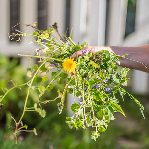 Getting rid of garden weeds|StodelsGarden Centre