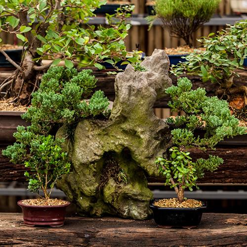 Beginner's guide to bonsai | Stodels Garden Centre