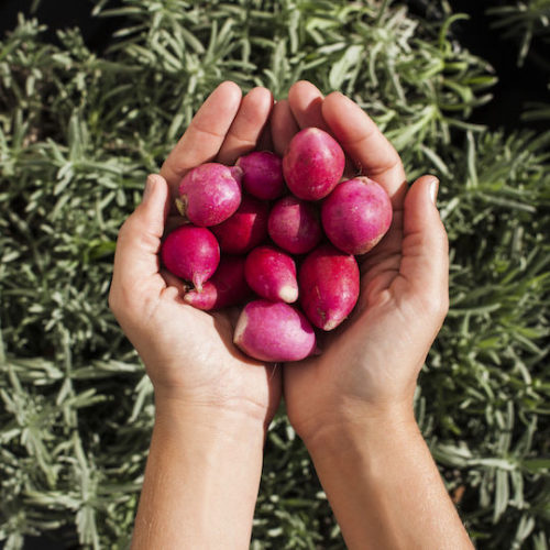 Grow your own Radishes