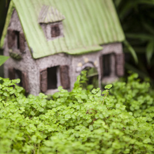 Small Gardens_Stodels