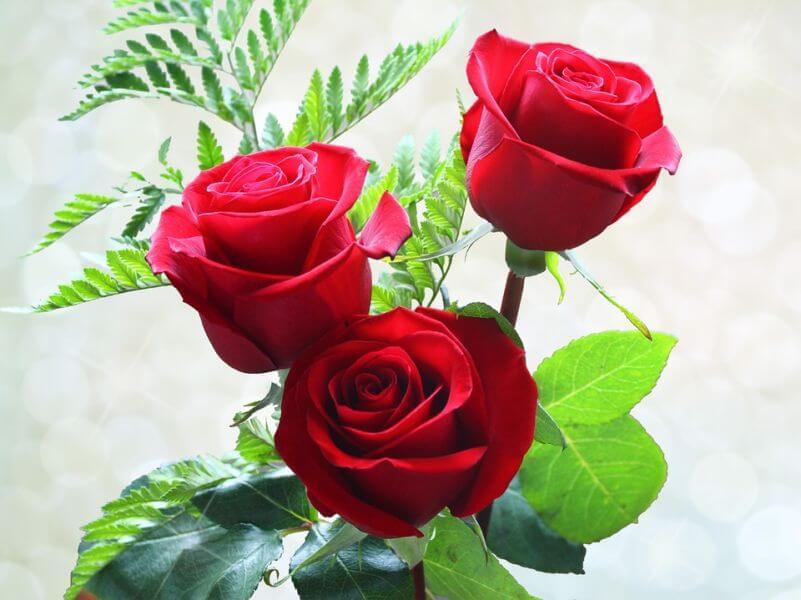 Afbeeldingsresultaat voor roses