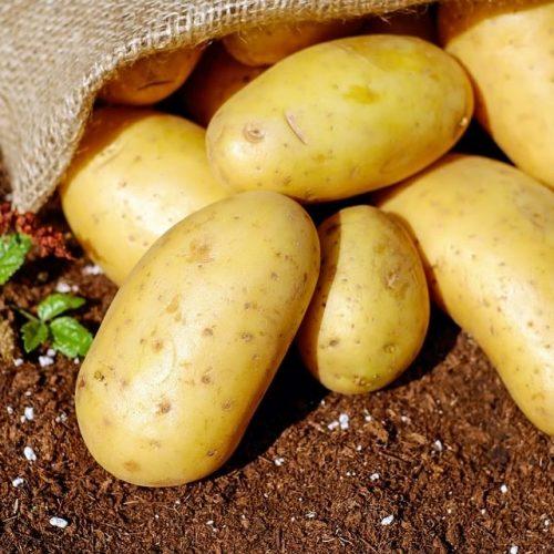 Kweek u eie Aartappels