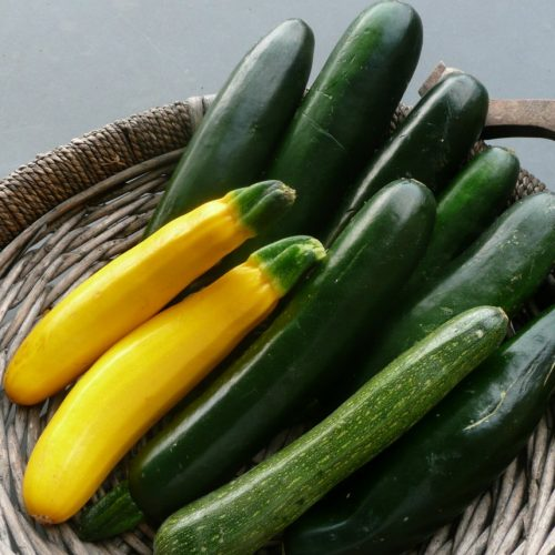 Step-by-step Guide to Growing your Own Baby Marrows, Corgettes or Zucchinis