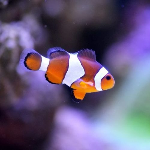 Manila Ocean Park Life Support System moreover 1328 Small Fish in addition Fresh Water Service Pond Tank Sky Bubble   514184 moreover Escalante State Park together with Marine Fish  patibility. on water tank