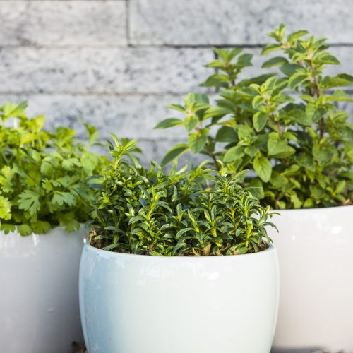 A-Z of Herbs and Veggies