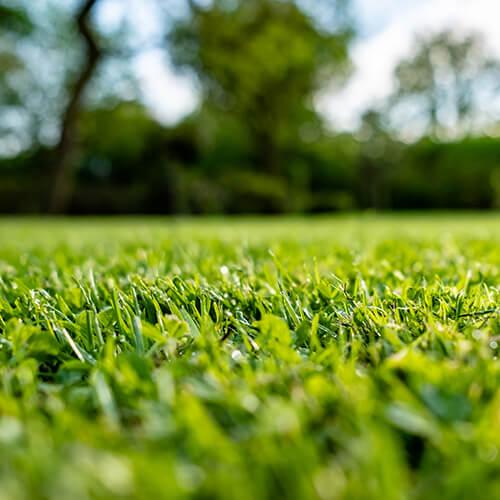 Tips for a lush summer lawn |StodelsGarden Centre