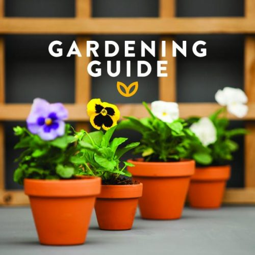 Stodels_May_garden guide 540 X 540