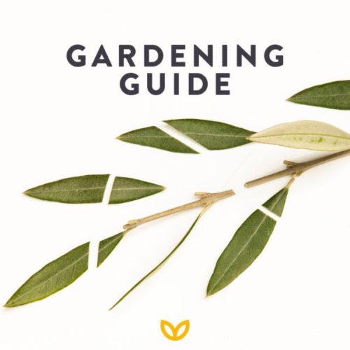Stodels July Garden Guide