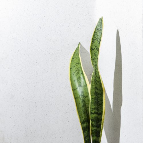 Waterwise Indoor Plants_Stodels