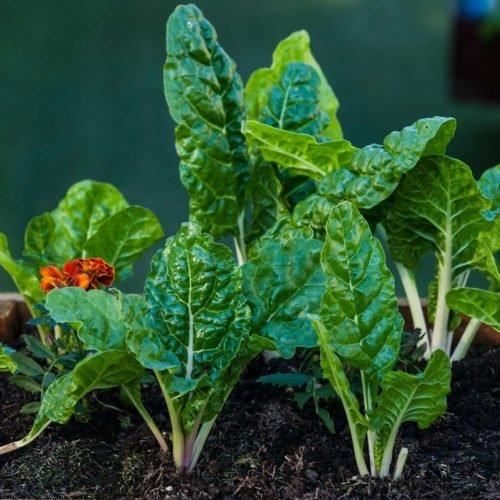 Grow your own veggies from seeds
