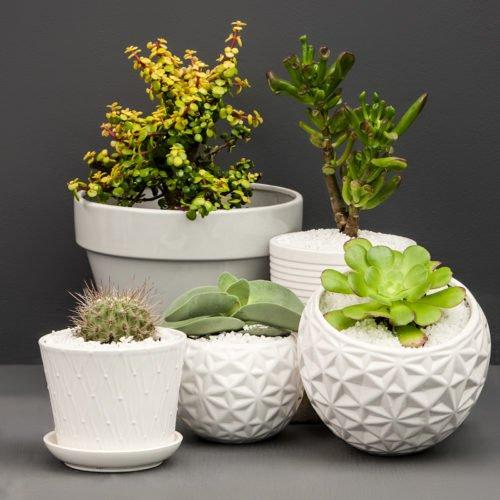 How to keep your succulents satisfied