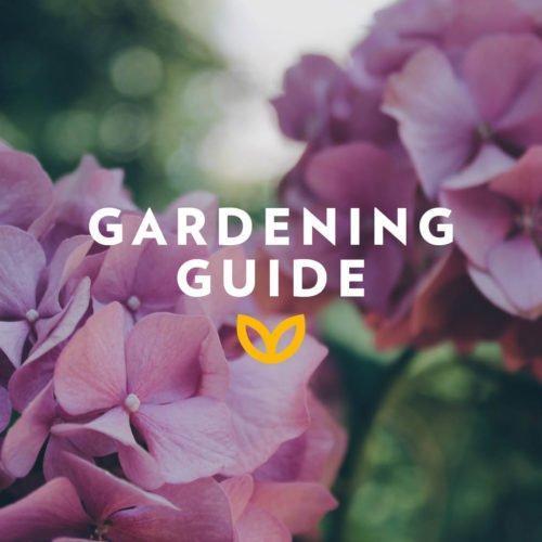 stodels_november_gardening-guide-540-x-540