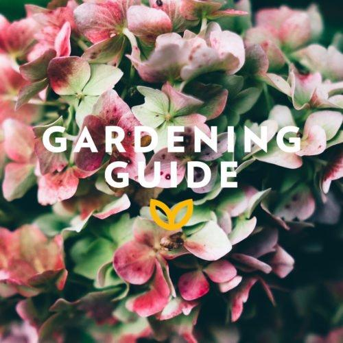 stodels_october_gardening-guide-540-x-540