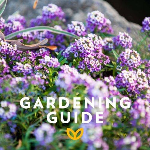 stodels_september_gardening-guide2-540-x-540
