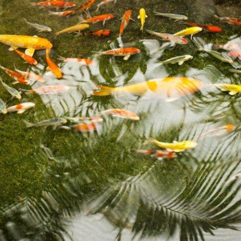 How to save water and still have a fish pond