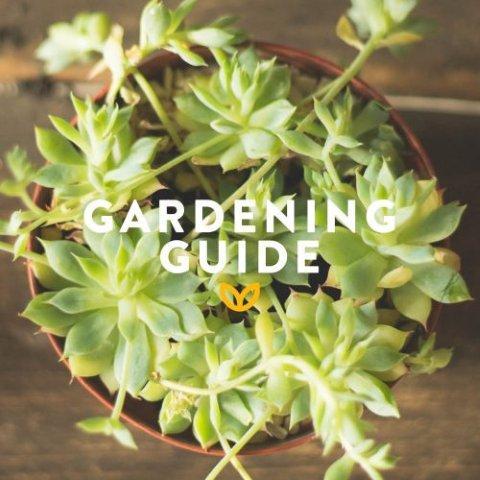 stodels_dec_garden-guide-540-x-540