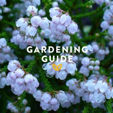 stodels_jan_garden-guide-540-x-540