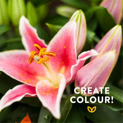 Plant some Summer Colour