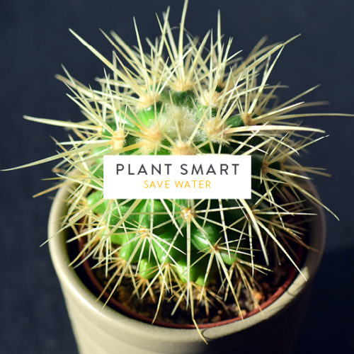 Plant Smart: Save Water