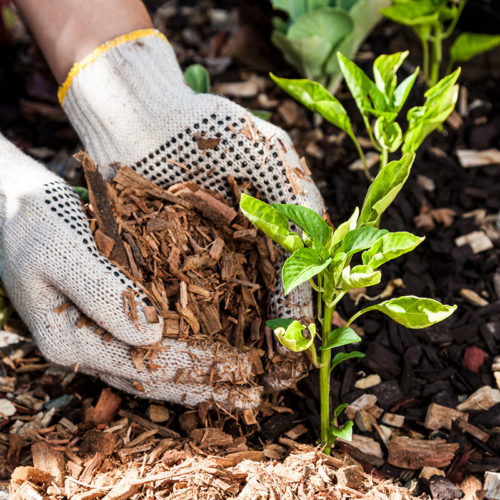Save water with mulching
