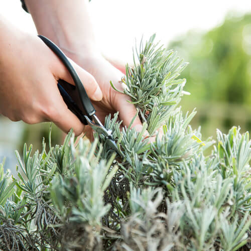 Prune your plants during winter