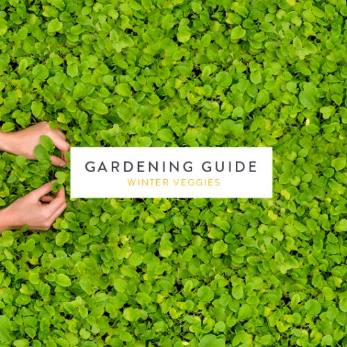 Stodels Gardening