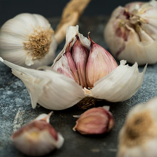 Spotlight on garlic