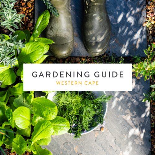 Western Cape August 2018 Gardening Guide