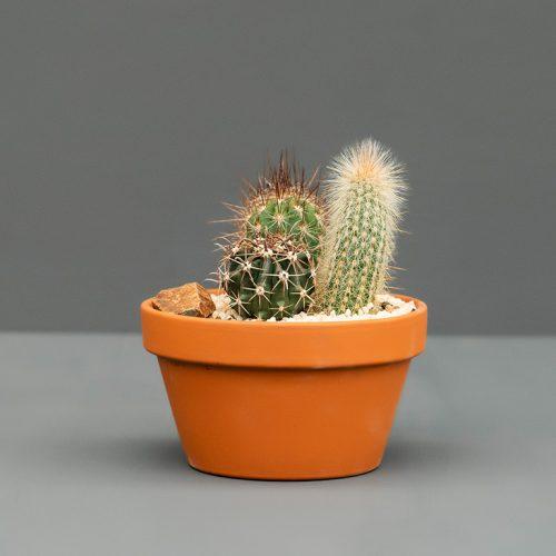 Cactus Trio Garden   Stodels Online Shop