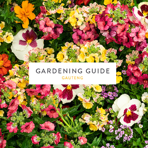 Stodels Gauteng Gardening Guide