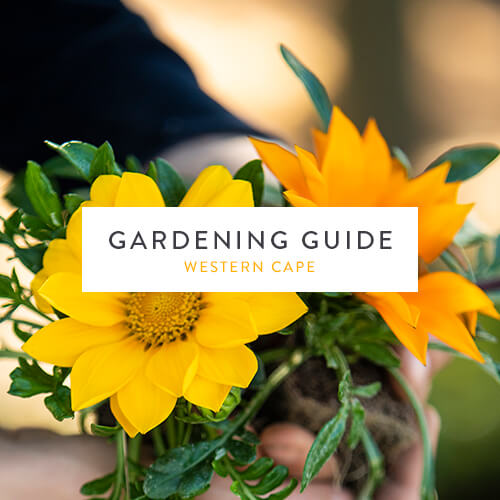 Western Cape October Gardening Guide