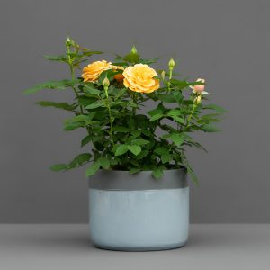 ROSE 14CM BLUE AND GREY POT COVER