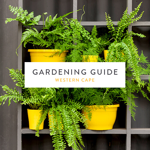 Western Cape gardening guide | November 2018 | Stodels Nursery