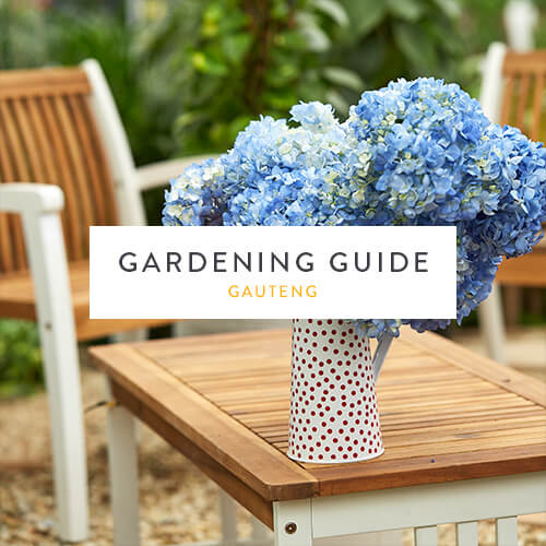 Gauteng gardening guide | November 2018 | Stodels Nursery