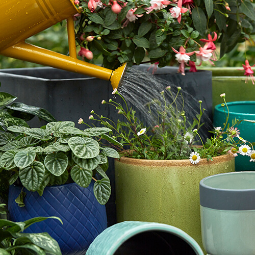 How to save water with container gardening | November 2018 | Stodels Nursery