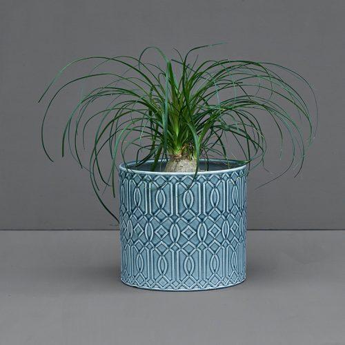 Potted Beaucarnea 20cm | Stodels Online Store