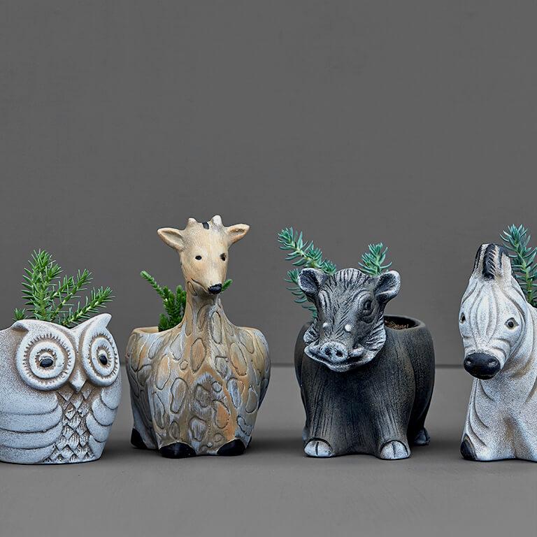 Succulent Animals 8cm | Stodels Online Store