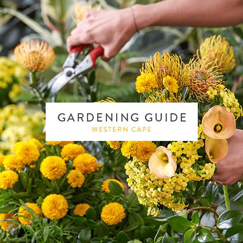 December 2018 Gardening Guide | Western Cape | Stodels Nursery