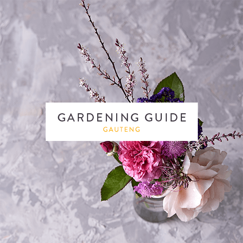 December 2018 Gardening Guide | Gauteng | Stodels Nursery