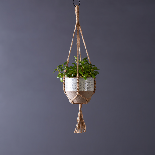 Potted Peperomia glabella 15cm in Jute Macramé | Stodels Online Store