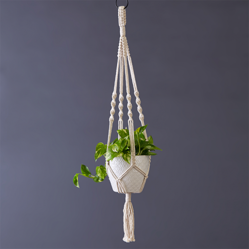Potted Scindapsus Aureus 15cm in Cotton Macramé   Stodels Online Store