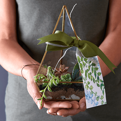 10 gardening gift ideas for the festive season | Stodels Nursery