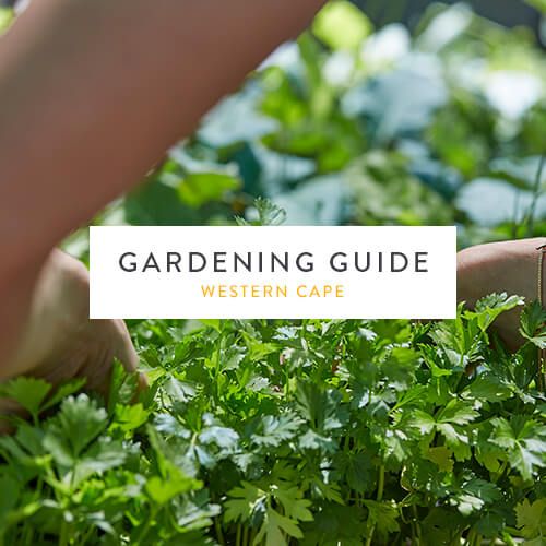 February 2019 Gardening Guide | Western Cape | Stodels Nursery