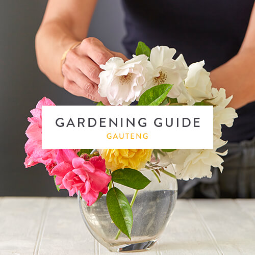 February gardening guide |Gauteng | Stodels Nursery