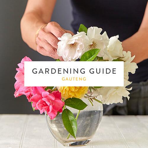 February gardening guide |Gauteng | Stodels Nursery