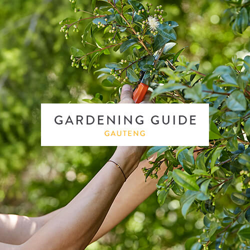 January 2018 Gardening Guide | Gauteng | Stodels Nursery