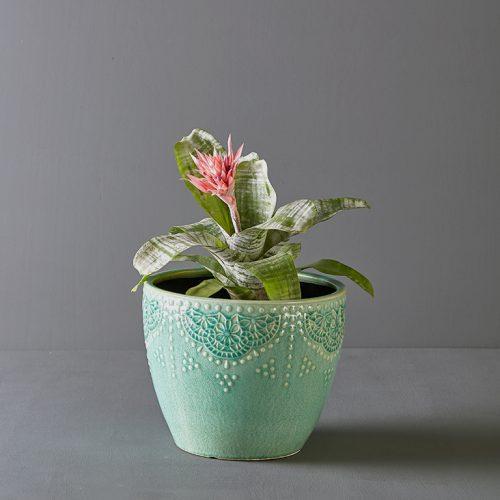 Bromeliad Fasciata in Green Pot Cover | Stodels Online Store