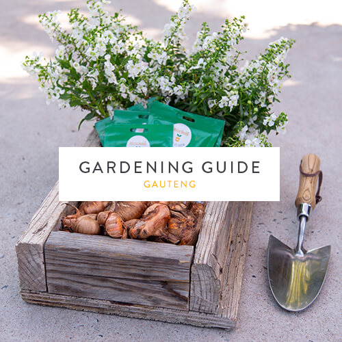 March gardening guide |Gauteng | Stodels Nursery