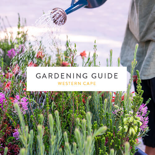 March 2019 Gardening Guide | Western Cape | Stodels Nursery