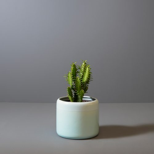 Euphorbia trigona 15cm in light blue pot | Stodels Online Store